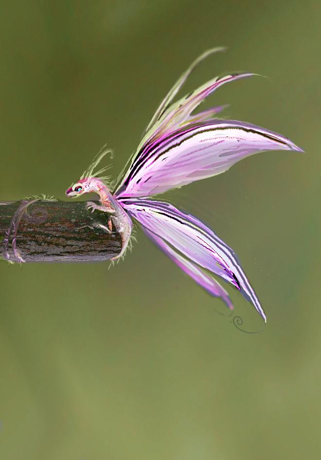 Dragon fée papillon [cyclopkilouch] Dragon18