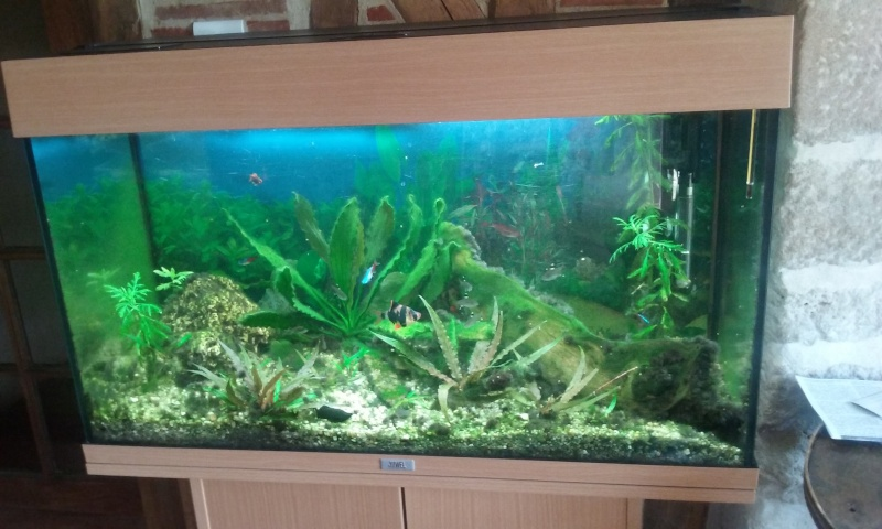 algues Aqua10