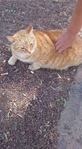 Tigger is found 10334210