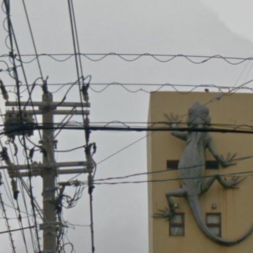 Un lézard à Nago - île d'Okinawa - Japon Cbk_lz10