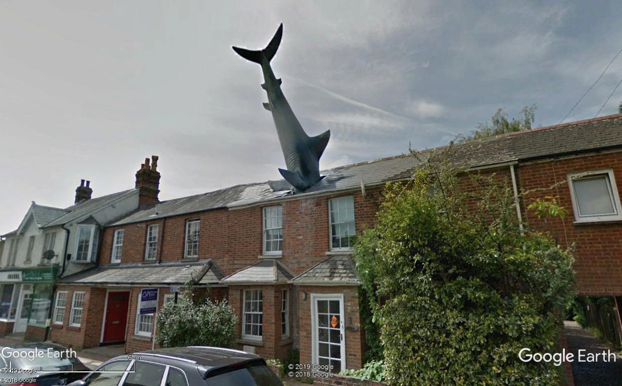Un requin attaque une maison Requin10