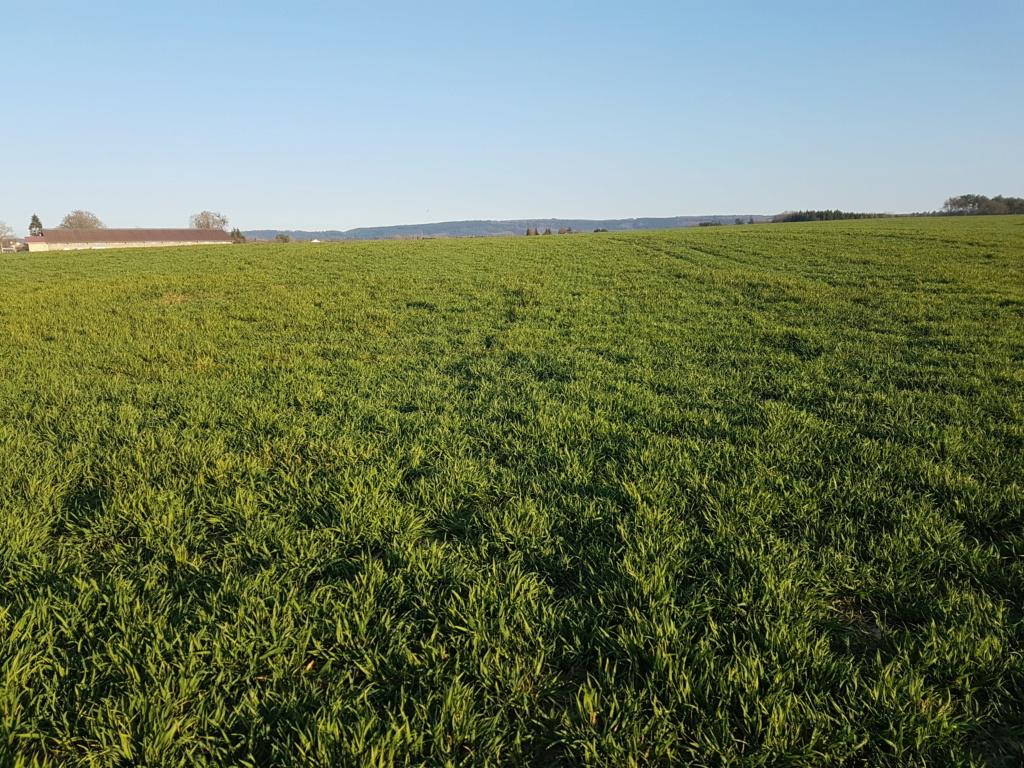 Suivi des blés 2020 20200418