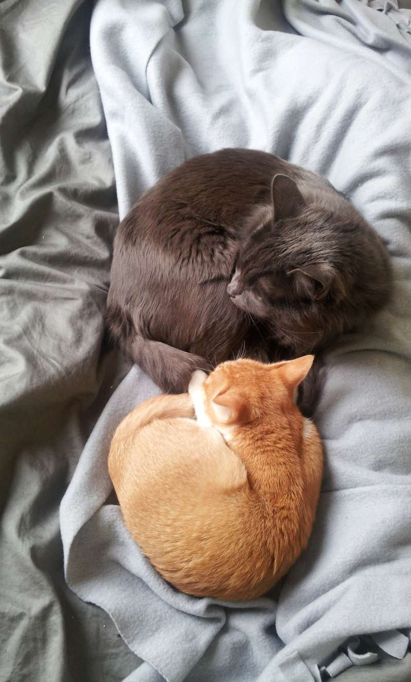 HELIO (Whiskas) et NEL (Giddy) - Page 4 20160212