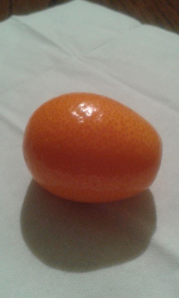Kumkvat--zlatna narandza K311