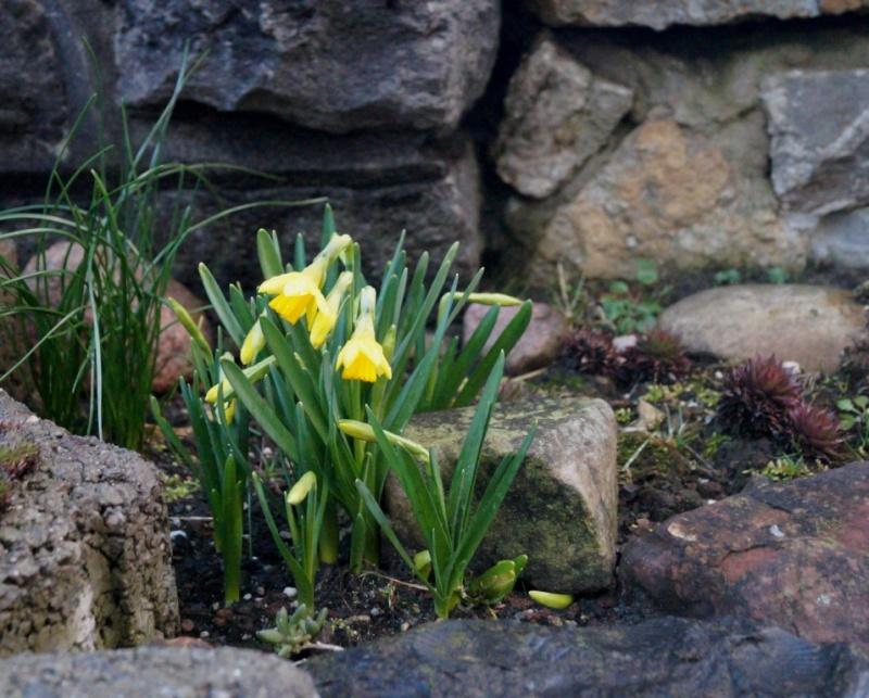 Hang- und Steingartenpflanzen - Seite 19 Dsc09016