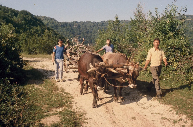 Agrar & selo u sjeni prošlosti - Page 2 10981010