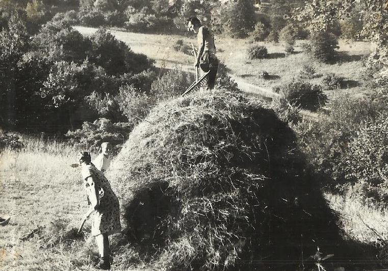 Agrar & selo u sjeni prošlosti - Page 2 11214310
