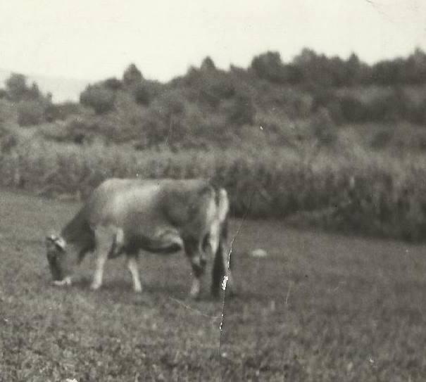 Agrar & selo u sjeni prošlosti - Page 2 11824910