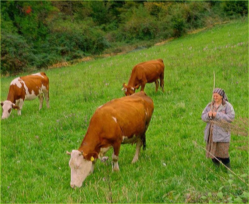 Agrar & selo u sjeni prošlosti - Page 2 12052410