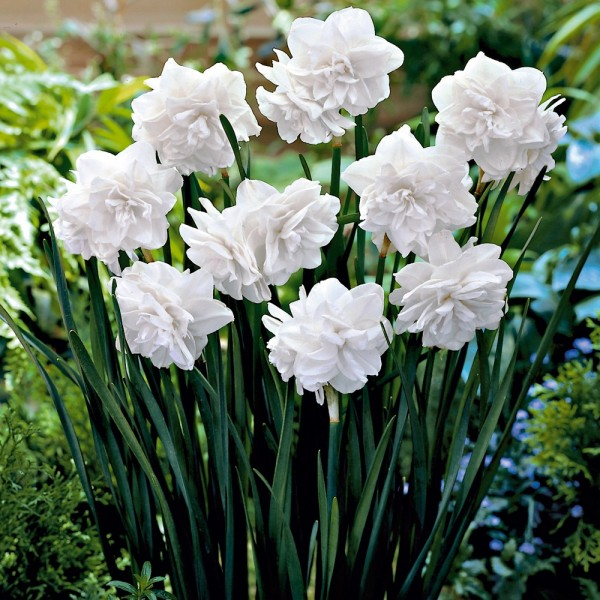 Rezano cvijeće 3794-510