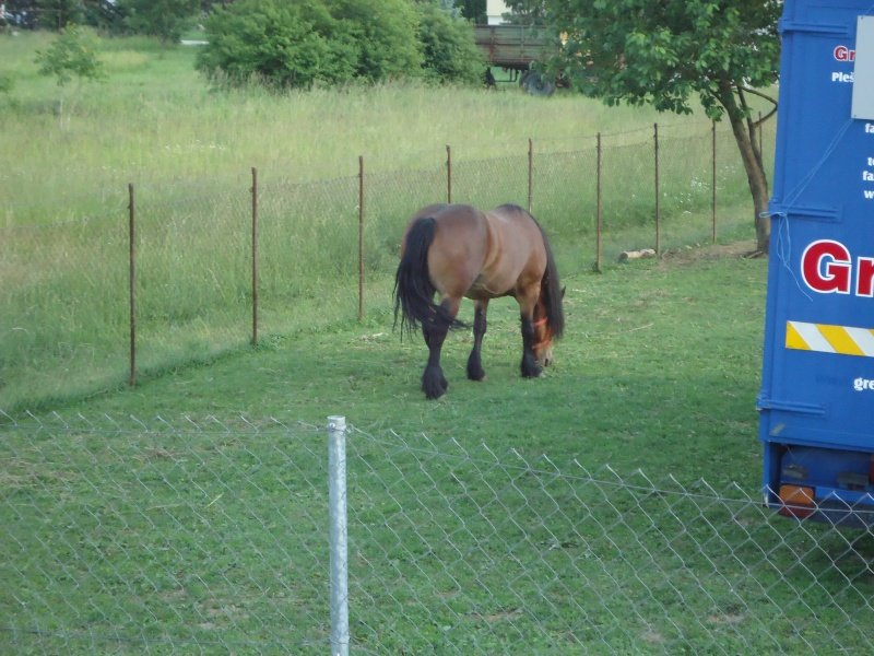 Posavski konj     Dsc01310