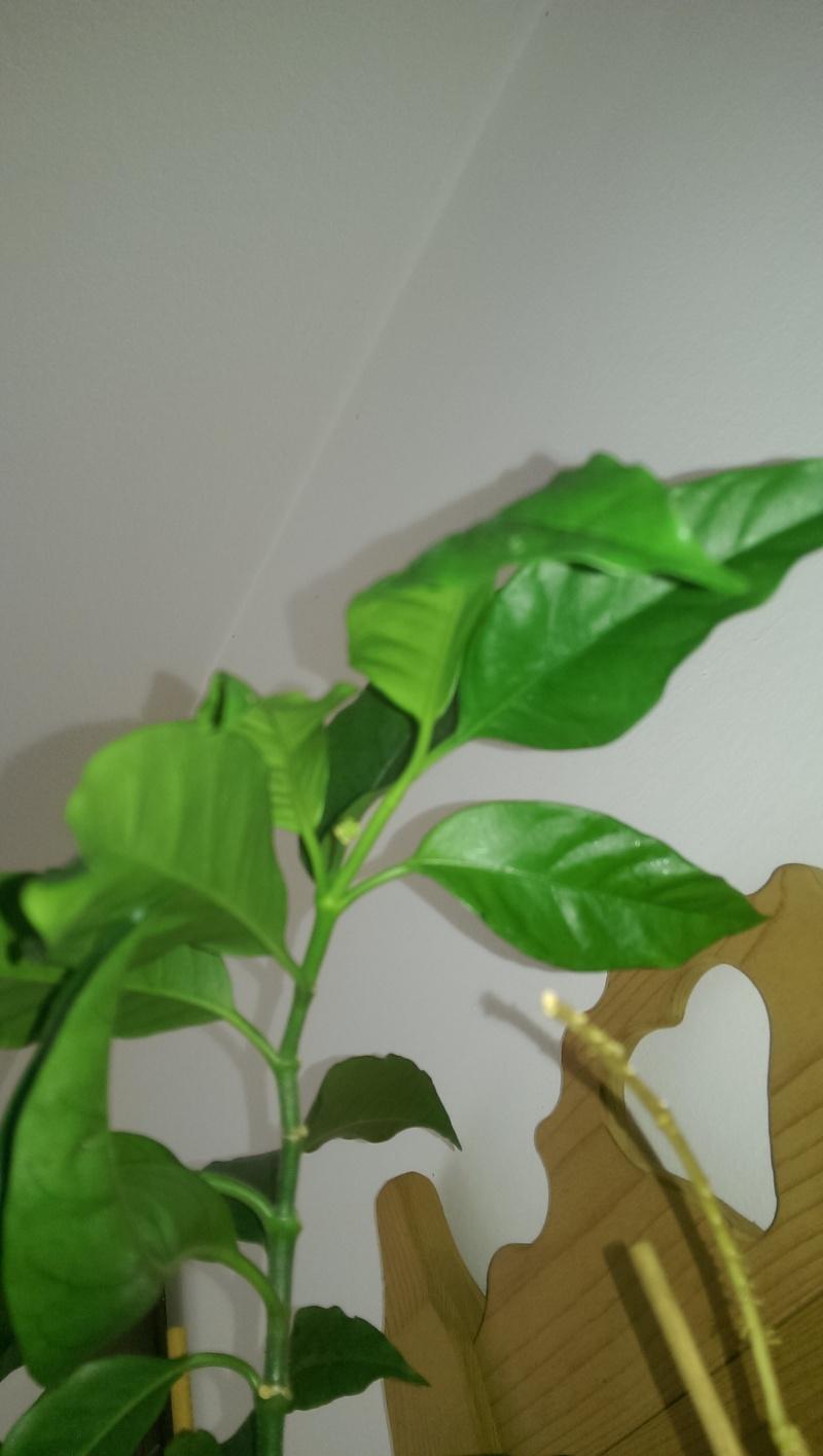 Susi's Hoyas Imag0010