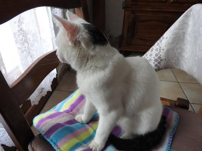 (Melle) Coco, adorable chatte de 6 mois Dscn1412
