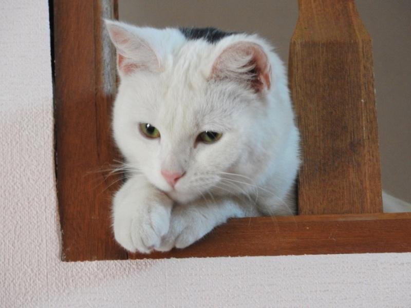(Melle) Coco, adorable chatte de 6 mois Dscn1510