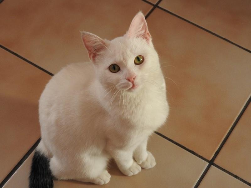 (Melle) Coco, adorable chatte de 6 mois Dscn1511