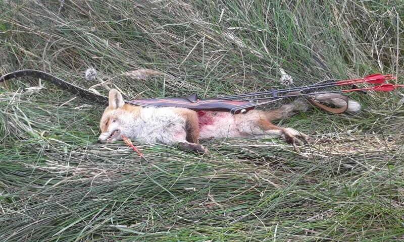 mon premier renard à l'arc 20160214
