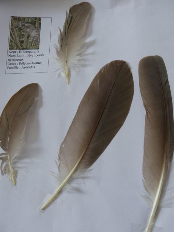 ma collection de plumes ! P1470312