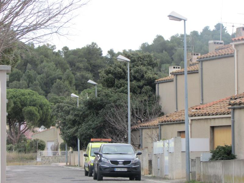 Pyrénées-Orientales (66) - Page 4 Img_3313