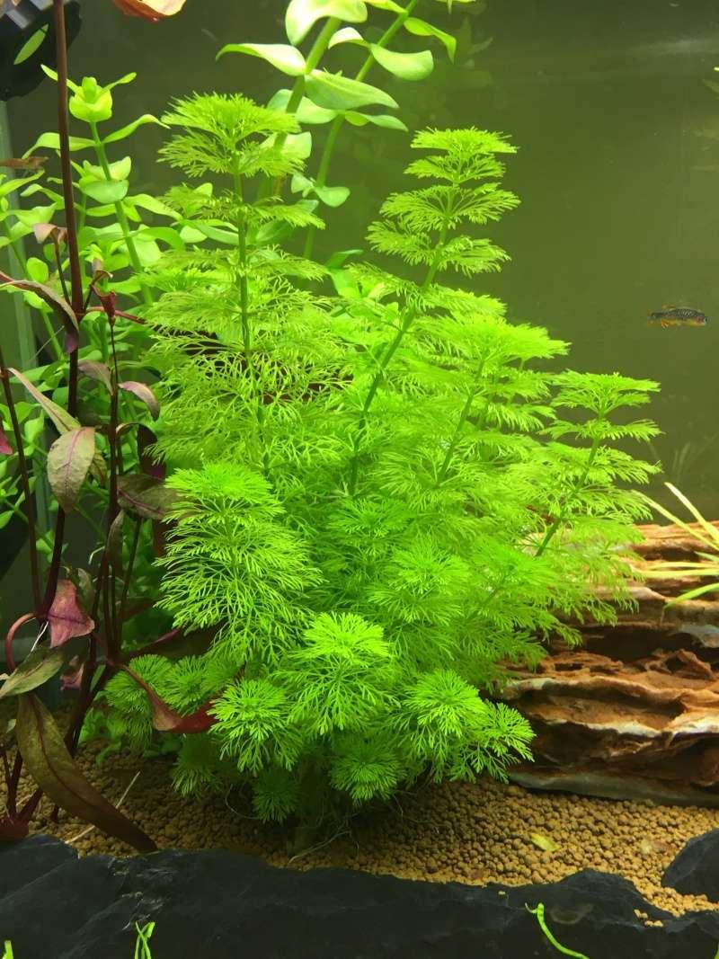 Identification plantes  Img_3410