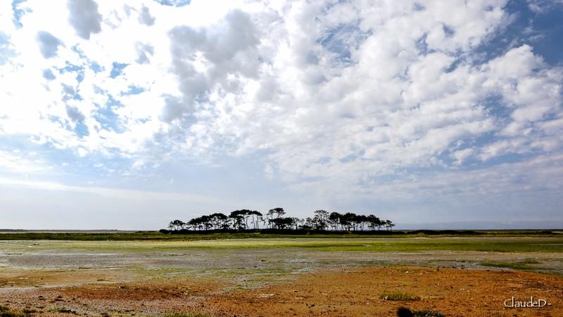 L' île aux pins, Riantec (56) Ilepin10