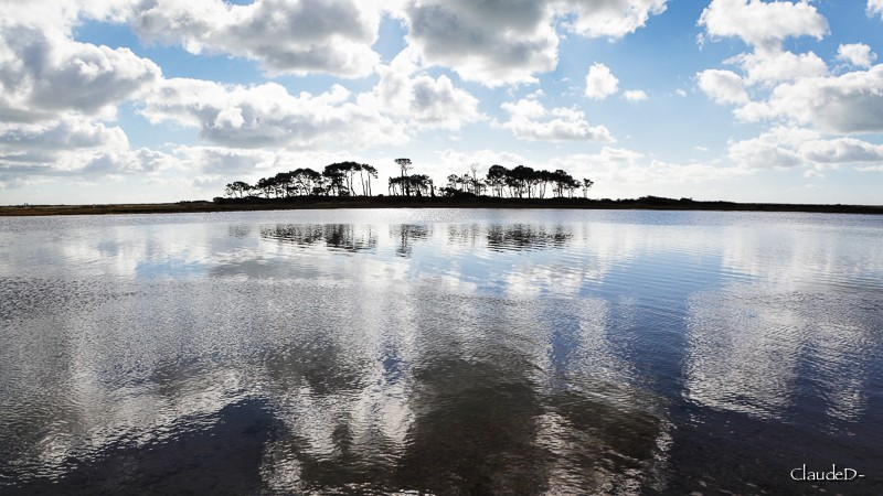 L' île aux pins, Riantec (56) Ilepin11