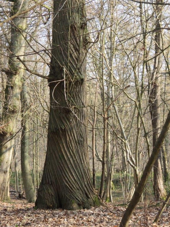 Rando du 13 mars en forêt de Marly Img_1817