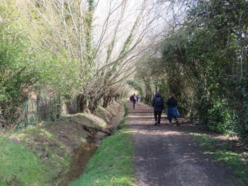 Rando du 13 mars en forêt de Marly Img_1818
