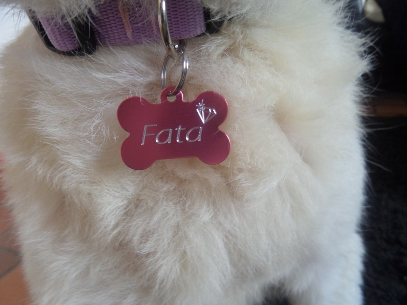 FATA, née le 12/06/2009, arrivée chiot au refuge (soeur de Mickey et fille de Tara) - en FA dans le 49 - GARANT - SOS -R-FB-SC-30MA - Page 6 Sam_2728