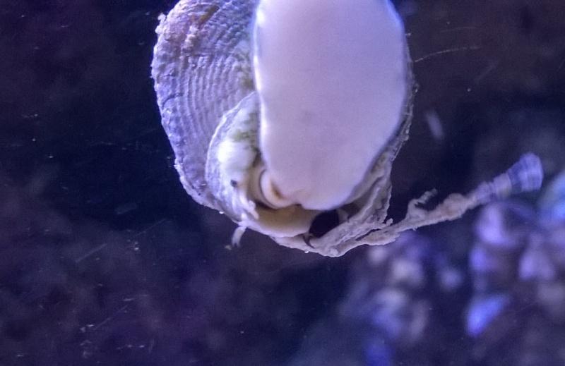 Escargot bizarre Wp_20111