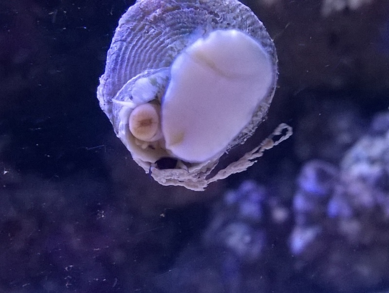 Escargot bizarre Wp_20112