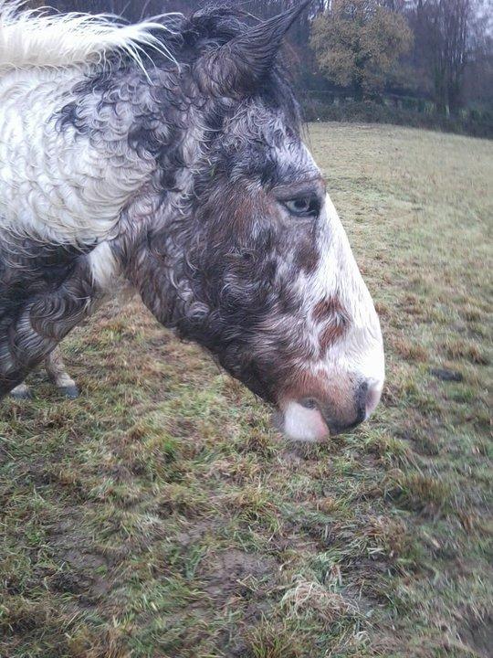 Les chevaux & Poneys des Sabots D'Argent. 16573410