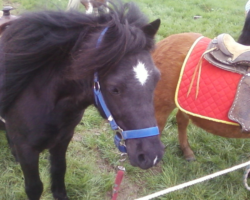 Les chevaux & Poneys des Sabots D'Argent. Photos11