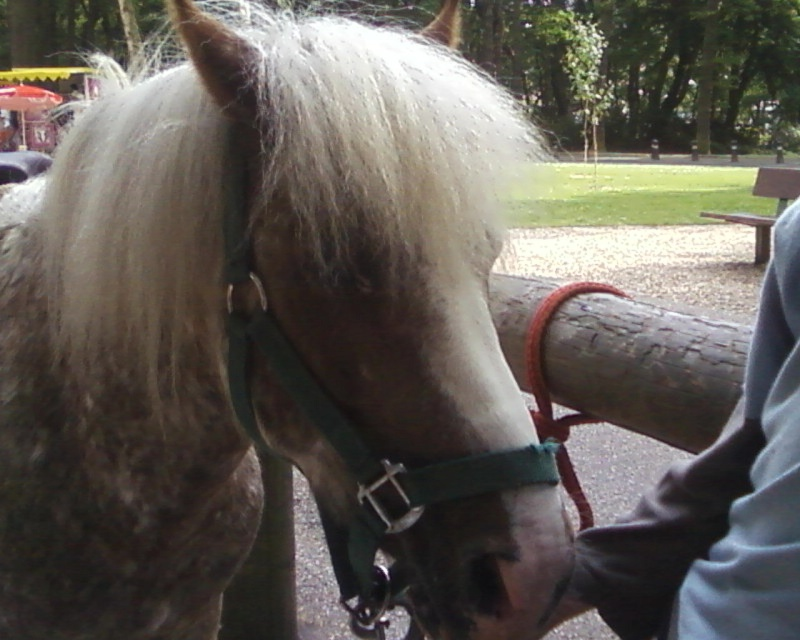 Les chevaux & Poneys des Sabots D'Argent. Photos12