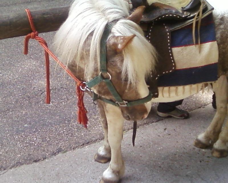Les chevaux & Poneys des Sabots D'Argent. Photos13