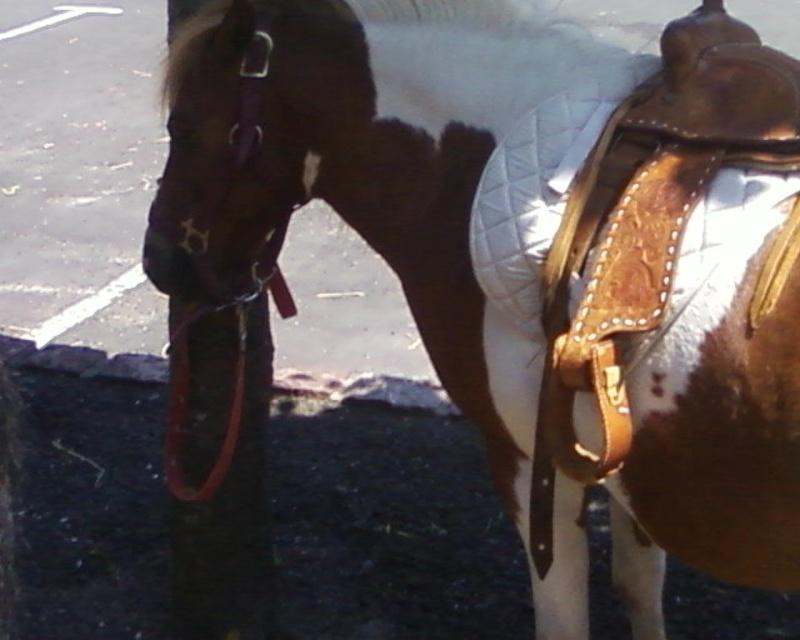 Les chevaux & Poneys des Sabots D'Argent. Photos14