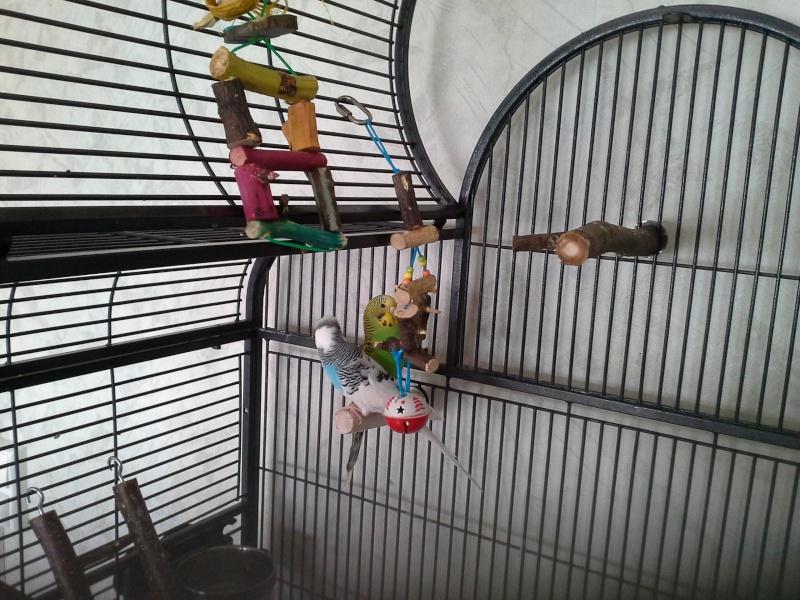 Help: Fabrication de jouets 02210