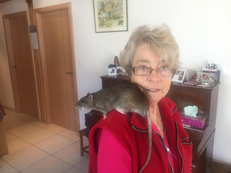 Sauvetages de 7 ratons sauvages - Page 2 Img_3410