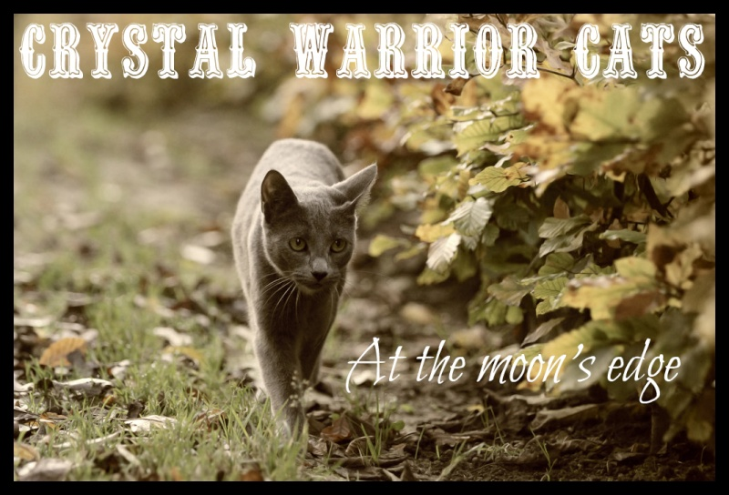 Crystal Warrior Cats Rolepaying
