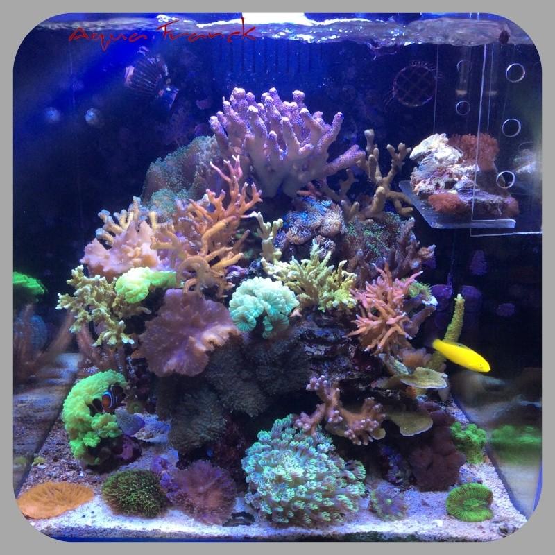 Présentation de mon Reefer 450 - Page 2 Image10