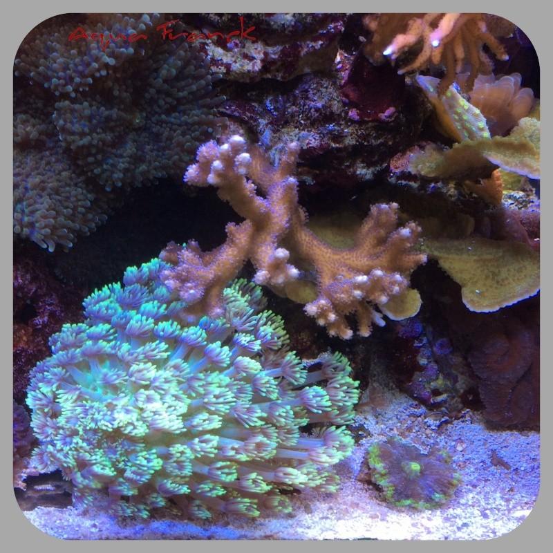 Présentation de mon Reefer 450 - Page 2 Image11