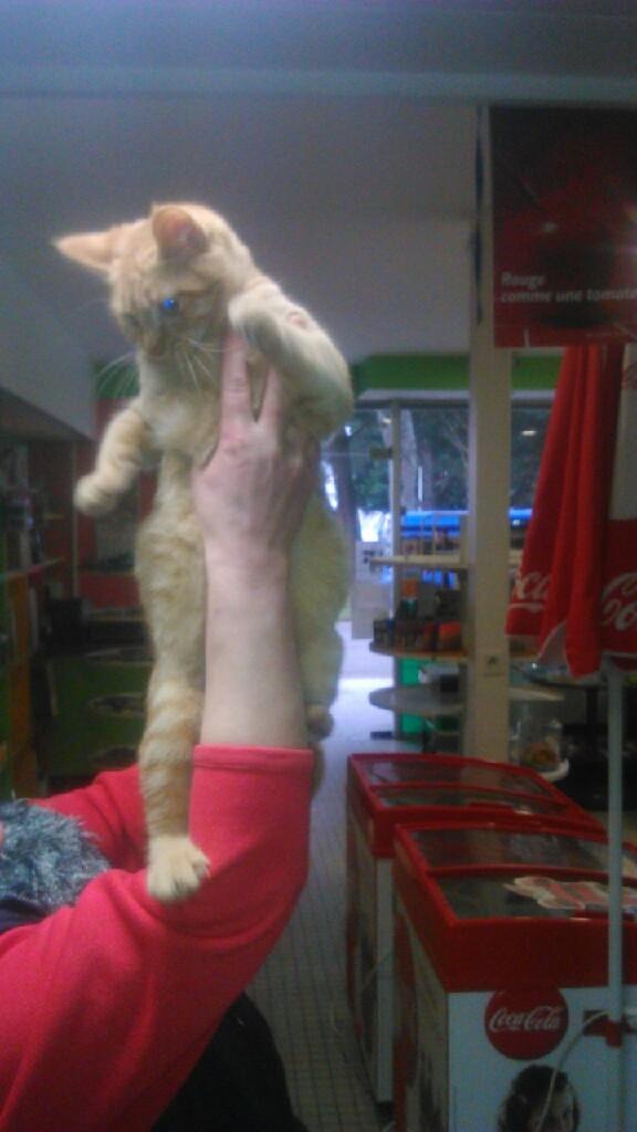 largo - LARGO, chaton européenne tigré roux, né en Novembre 2015 Mms_im11