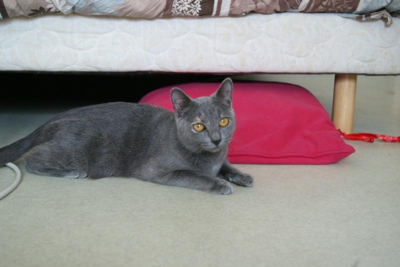 Isabelle, femelle type européen grise estimée née 12/02/2015 - Page 2 Dsc00014
