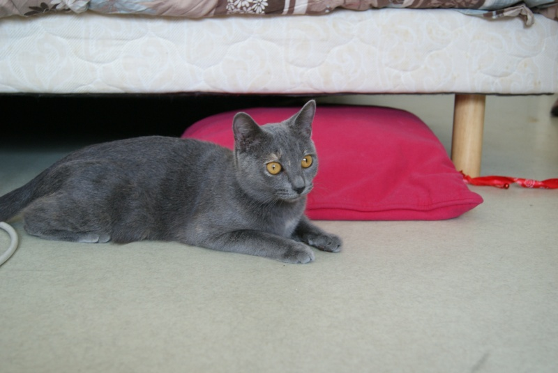 Isabelle, femelle type européen grise estimée née 12/02/2015 - Page 2 Dsc00016