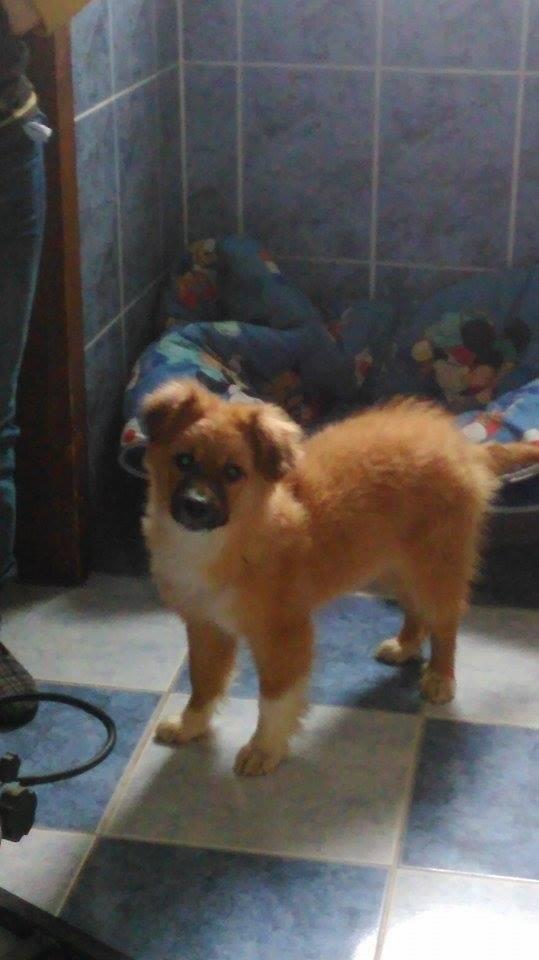 HARIBO (ex HARRISON),  mâle, né en septembre 2015 (Pascani) - adopté par Célia (depart67) - DOIT CHANGER DE FAMILLE URGENT - Page 2 2_harr10