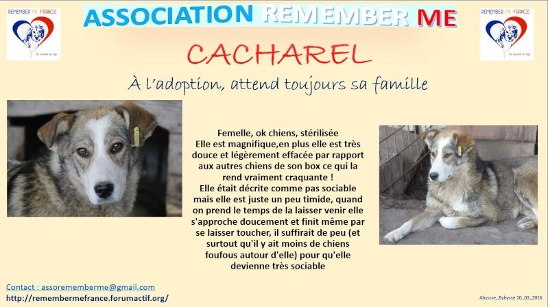 CACHAREL - !! TROIS ANS DE BOX !! Femelle, née env 2014, croisée taille moyenne - REMEMBER ME LAND - Adoptée par Daniel (83) Cachar10