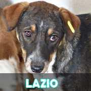 Grande campagne d'identification et vaccination à Pascani : ils ont besoin de vous ! - Page 6 Lazio10