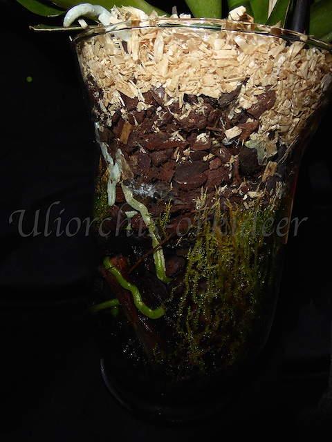 Orchideen in Glasvasen 4 (SGK) - Seite 25 P1030912