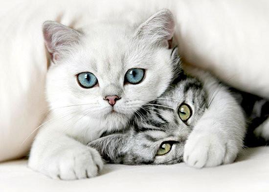 les chats C5c12410