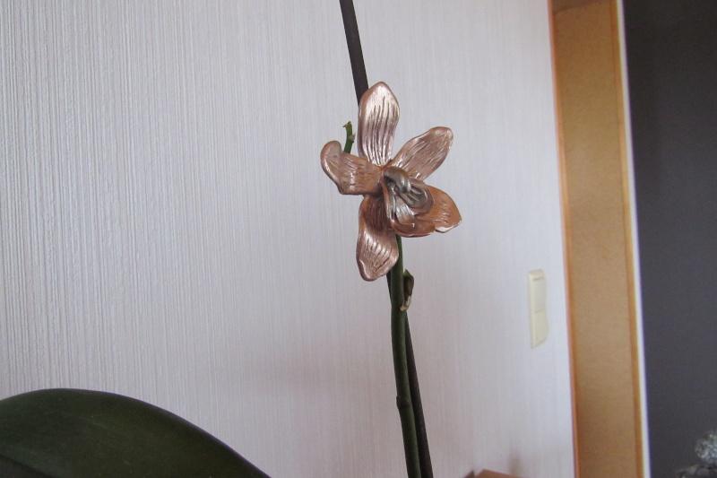 Concours du forum Météor : Les fleurs ! - Page 2 Img_0910