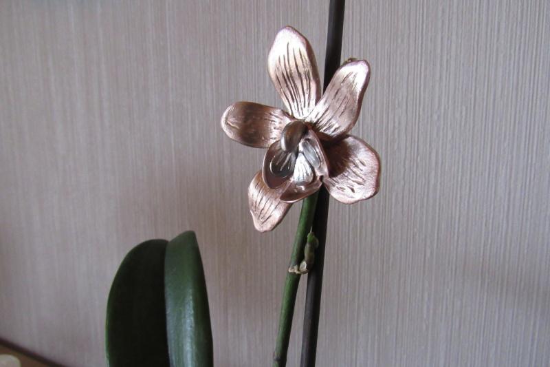 Concours du forum Météor : Les fleurs ! - Page 2 Img_0911